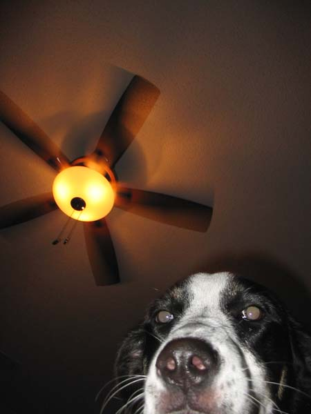 kaya_ceiling_fan.JPG