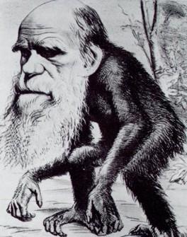 darwin_ape.jpg